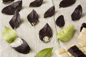 hojas chocolate frabisa00003