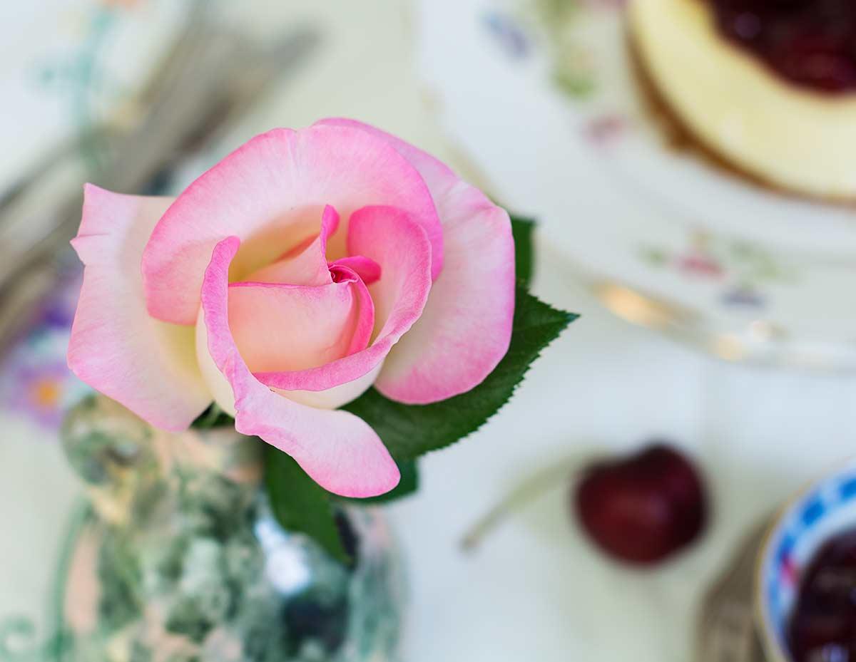 rosa-frabisa